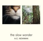 AC Newman Slow Wonder