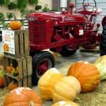 York Fair: giant pumpkins