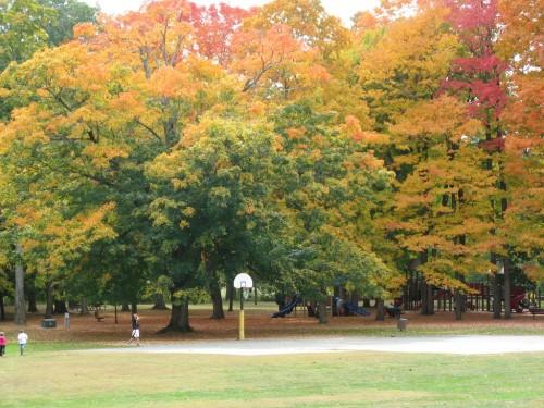 Look Park Foliage