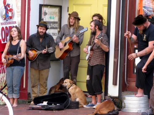 Old Port bluegrass