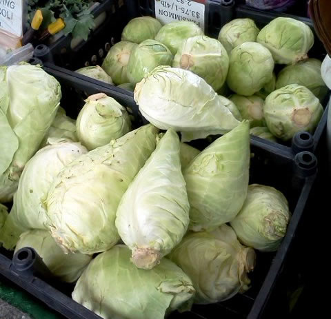 torpedo cabbage