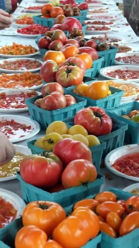 Tomato Festival