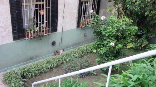 San Telmo courtyard kitty
